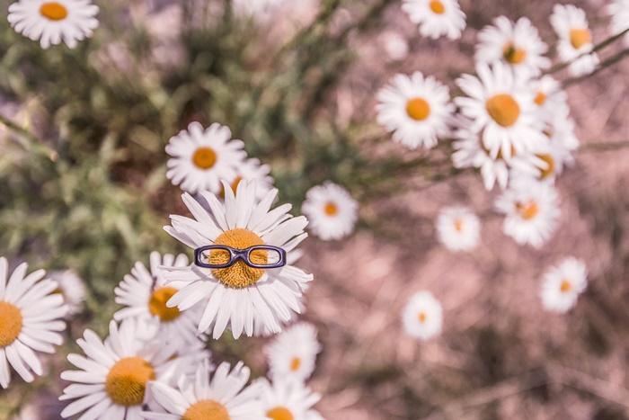 Imagen con flores margaritas, una de ellas con gafas