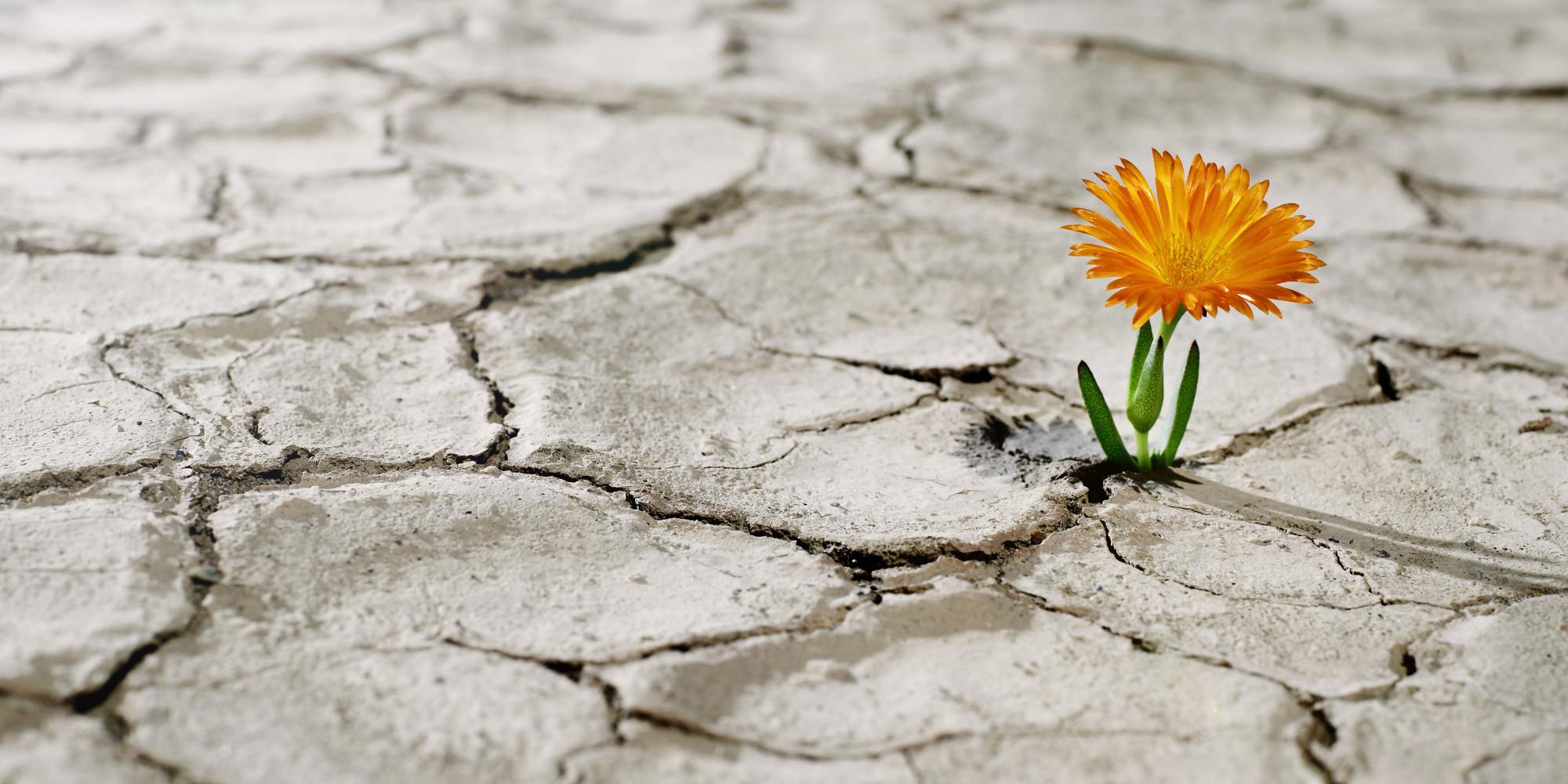 Flor creciendo en un suelo seco
